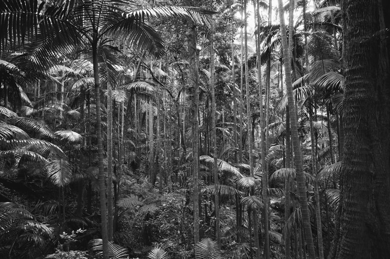 A photo of the rainforest at Mount Warning