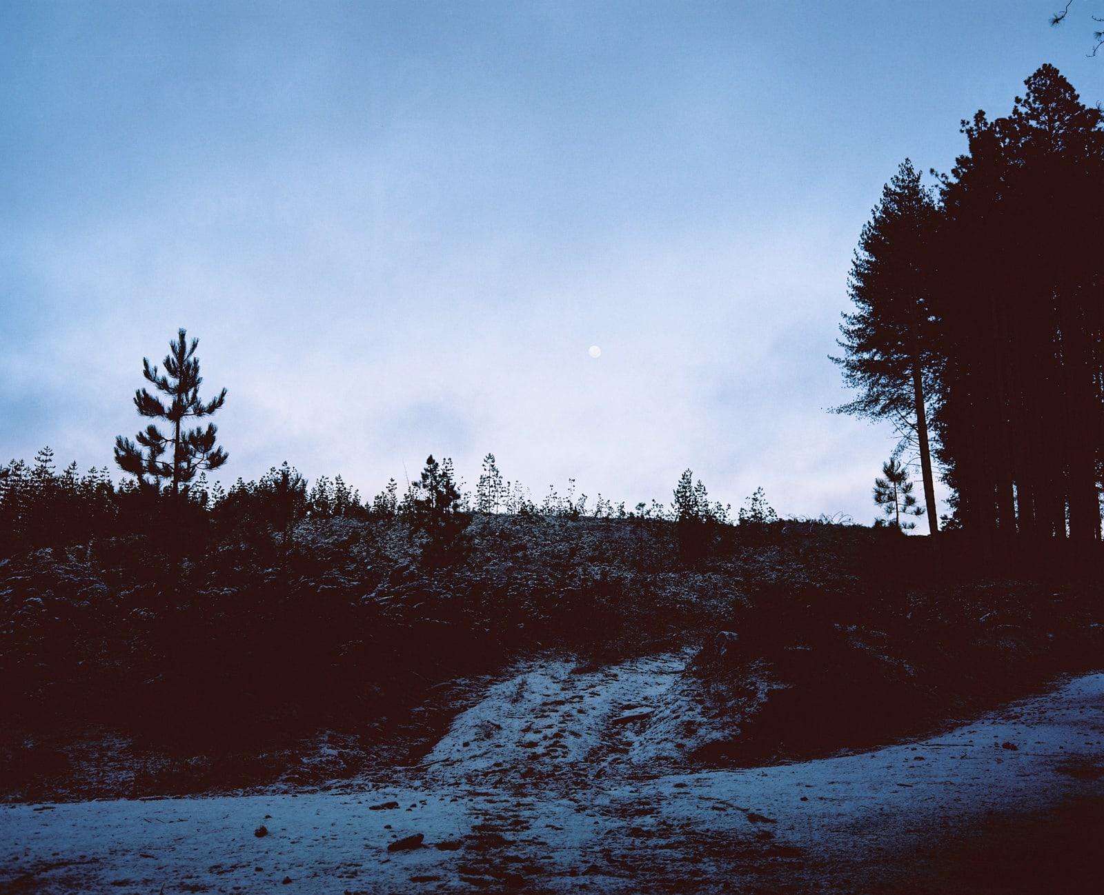 Sugar Pine Forest