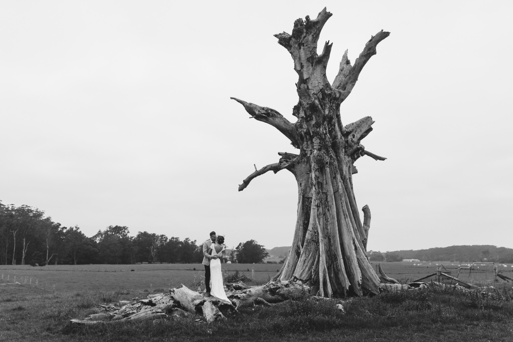 Bride and Groom under the Willow Tree at Willow Farm in Berry. A black and white photo at one of the nicest Berry Wedding Venues.