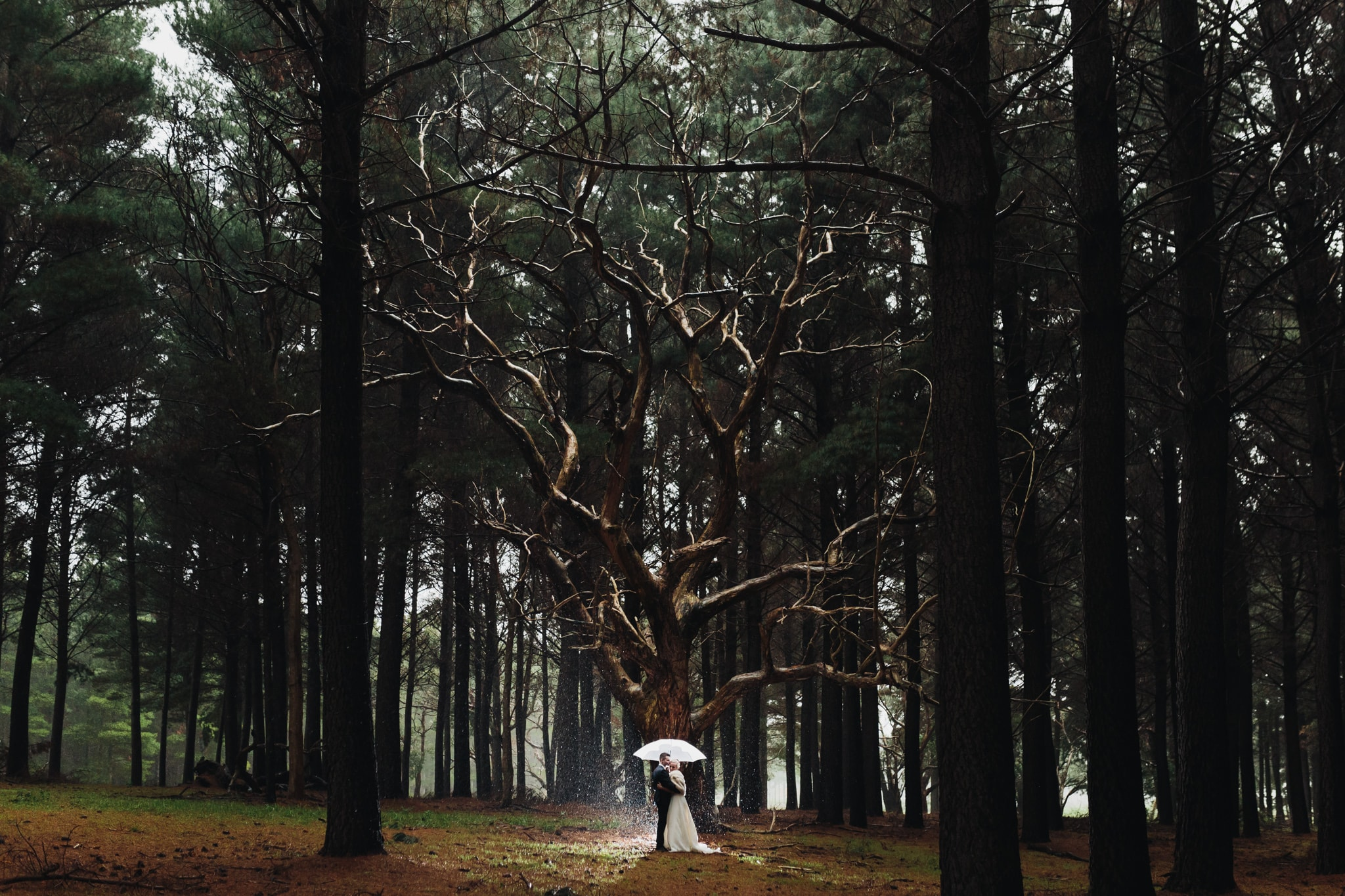 Bride and groom in Kuipto Forest for their Country South Australia wedding